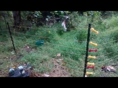 Electronetting Fence Alternative for Goats