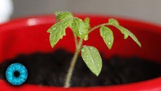 Pflanzen mit Superkräften - Clixoom Science & Fiction