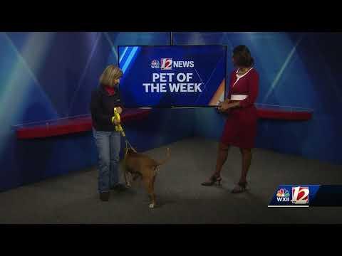 Noon Pet Of The Week:  Mazie