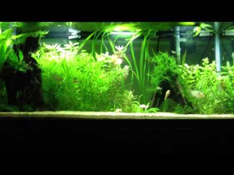 What should I do with my aquarium?