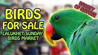 Birds for Sale in Karachi | Lalukhet Sunday Birds Market | Beauty of Nature | Video in Urdu/Hindi