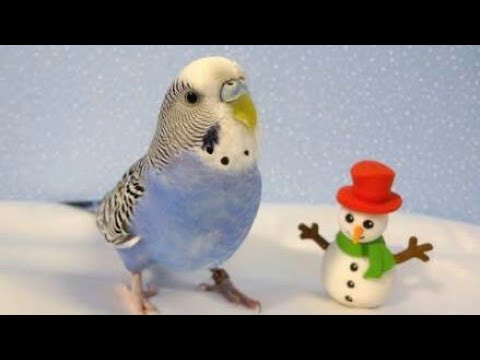 How to protect your birds in winter Urdu/hindi