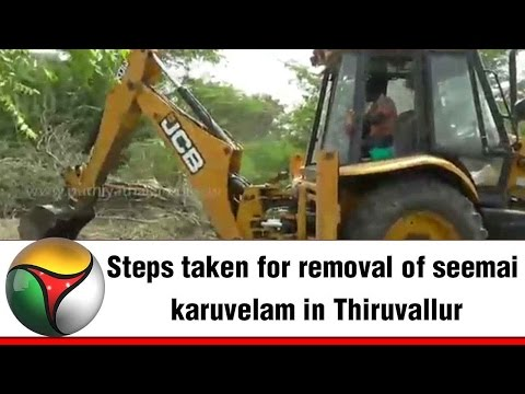 Steps taken for removal of seemai karuvelam in Thiruvallur