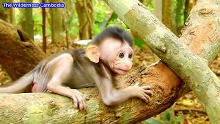 FIND REAL REASON | Why Giant Mama Fight Baby Mona | Baby Not D0 Anything Wroong Why Mama D0 This?
