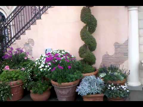 What is a Topiary? Answered