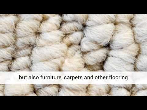 Could You have MOLD hiding in your carpet