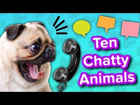 Ten Chatty Animals // Funny Animal Compilation