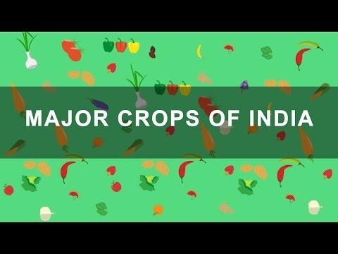 Major Crops of India