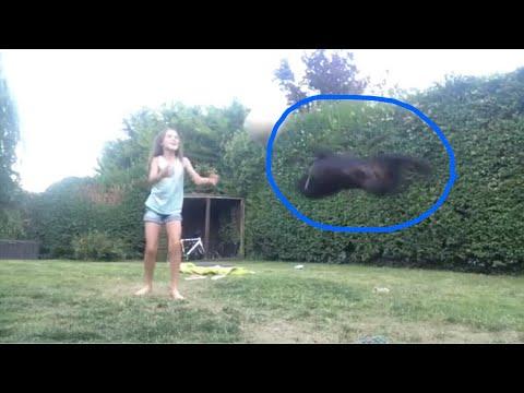My dog can do a backflip/back handspring 😮😂