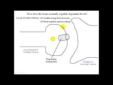 Basic smoking physiology Part 2