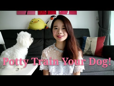 How to Potty Train Your Dog (Indoor & Outdoor)