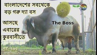 Deepto Krishi/দীপ্ত কৃষি- বাংলাদেশের সবথেকে বড় গরু দ্যা বস | Big Cow | সাভার | deepto tv |