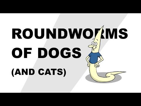 Roundworms of Dogs (and Cats) - Plain and Simple