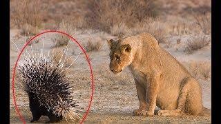 Wildlife Animal Fails | Predators Fails - Wildlife Animals Moments of Failure