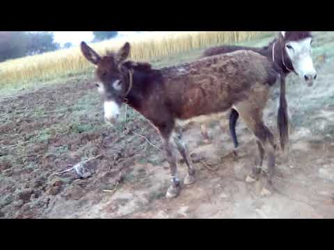 Xxx Mp4 Sexy Donkey Meeting First Time 2019 3gp Sex