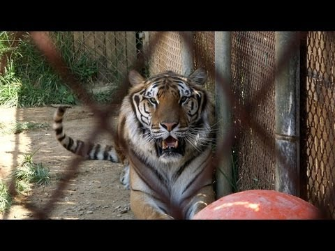 Danger in Your Backyard - Wild Animals as Pets