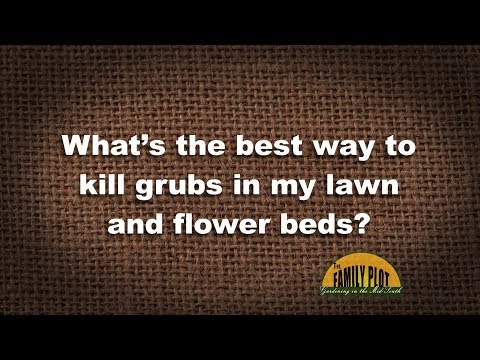 Q&A – What's the best way to kill grubs?