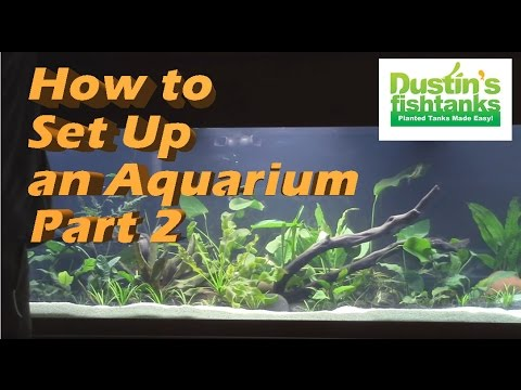 How to setup an Aquarium, Setting up a fishtank with Bryan