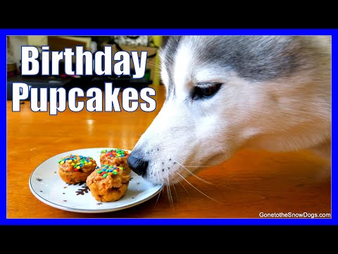 HOW TO MAKE DOG BIRTHDAY PUPCAKES | DIY Cupcakes for Dogs | Easy Recipe Snow Dogs Snacks 47