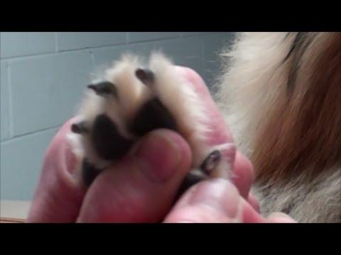 Cutting dog toenails too short...Oh Boy!