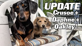 LIVE UPDATE with Crusoe, Daphne.. and OAKLEY!
