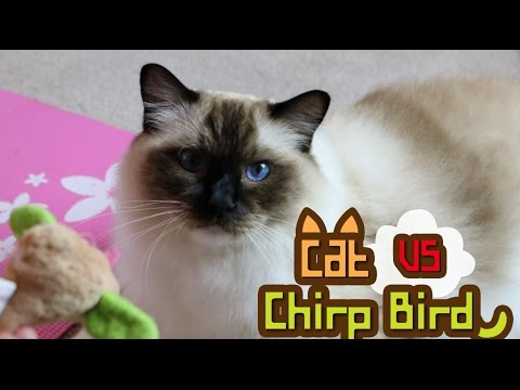 Cat and Chirping Bird Toy.