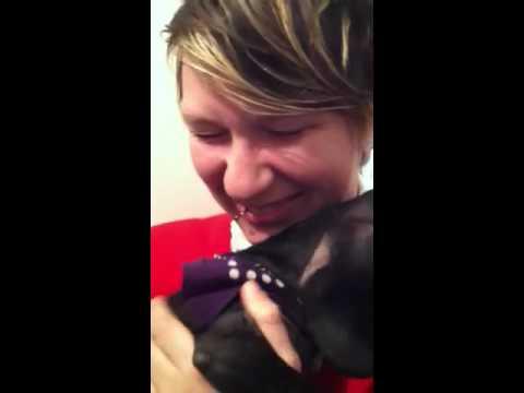 puppy armpit farts