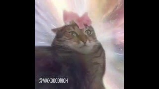 Cat Transcendence