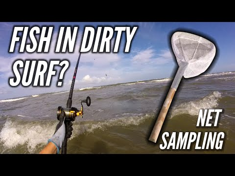 Can You Catch Fish in Brown Surf? - Surf Fishing