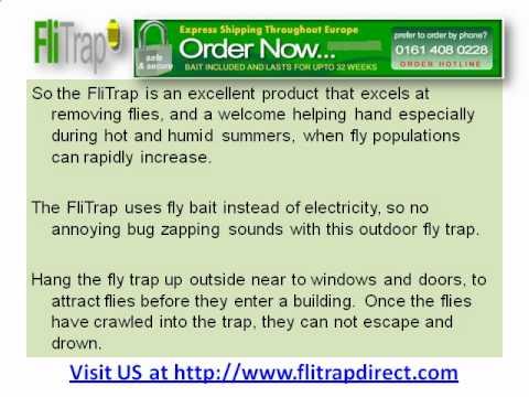 Kill Cluster Flies