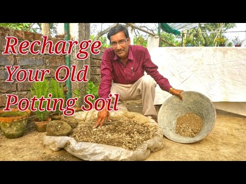 How to Revitalize your Old Potting Soil. The Total Procedure.