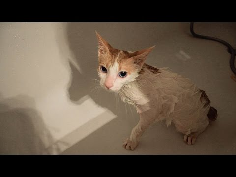 Cat Hates Getting Wet - First Bath
