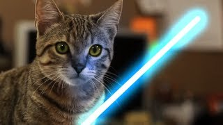 Jedi Kitten - The Force Awakens