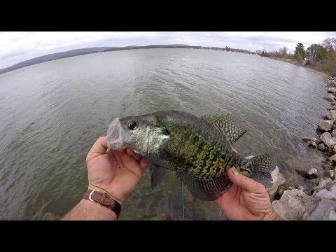 Crappie Fishing With Live Minnows - Lake Guntersville