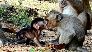 Very cute baby Lori learn to talkative with little monkey, real life of baby Lori