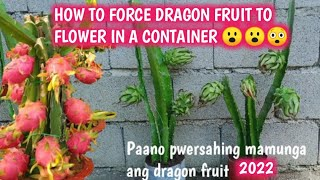 HOW TO INDUCE DRAGON FRUIT TO FLOWER