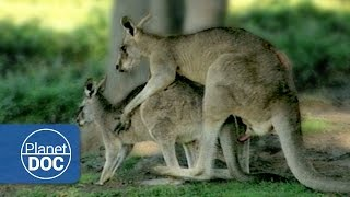 Relationship \u0026 Animal Mating | Sexual Conflict - Documentary
