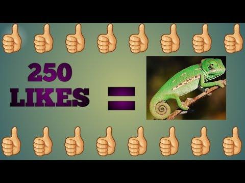 250 likes = Chameleon