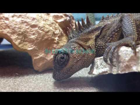Meet Rocky!!!