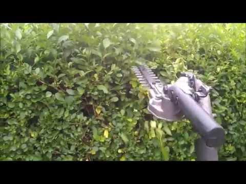 another cottage hedge privet