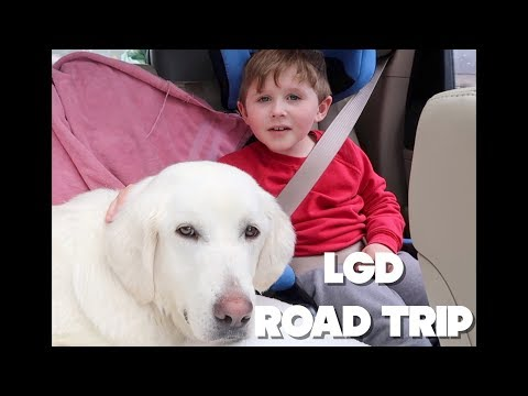 Bringing Willow Home: Leaving Jackson Hole for North Idaho with our LGD Rescue