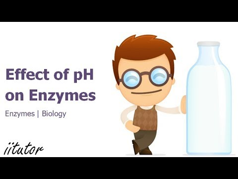 √ Experiment Effect of pH on Enzymes | iitutor