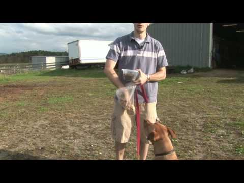 Dog Training, Feeding & Care : How to Switch Your Dog's Food