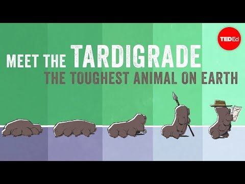 watch Meet the tardigrade, the toughest animal on Earth - Thomas Boothby