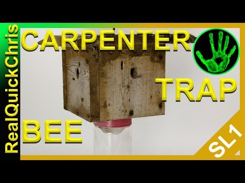 how to kill carpenter bees fast