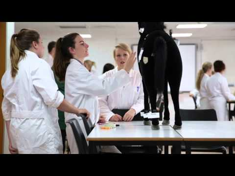 Veterinary Nursing Degree at Hartpury
