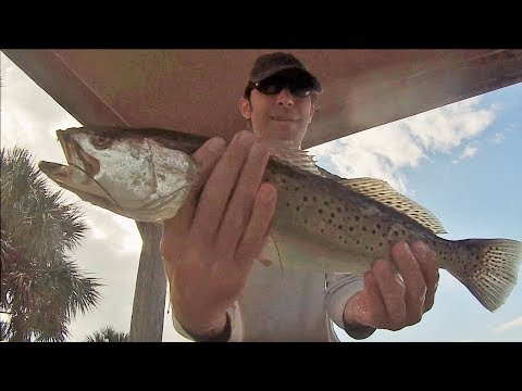 Spotted Seatrout - Catch and Cook