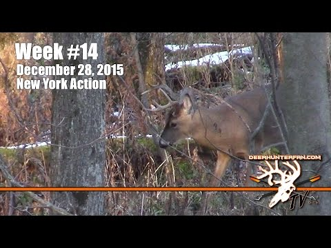 Buck Kill Rifle New York