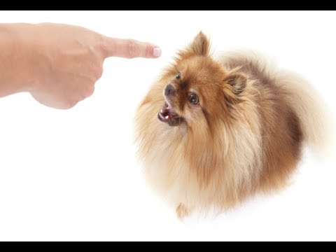How to Stop a Dog from Barking -  Stop Dog Barking Tips