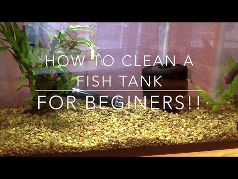 How to Clean a Fish Tank! - For Beginners